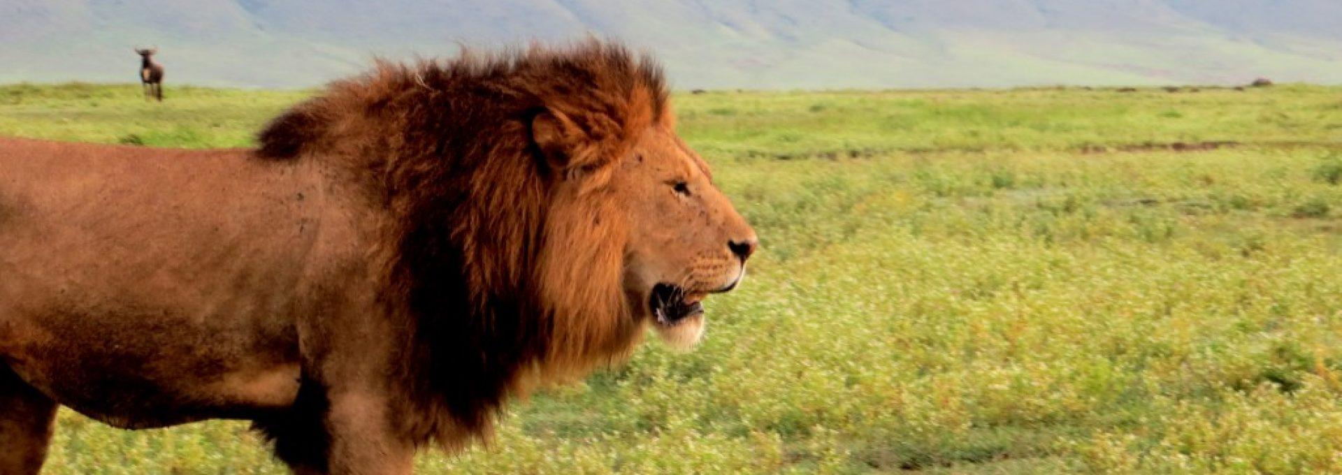 Zazu Tanzania Safaris