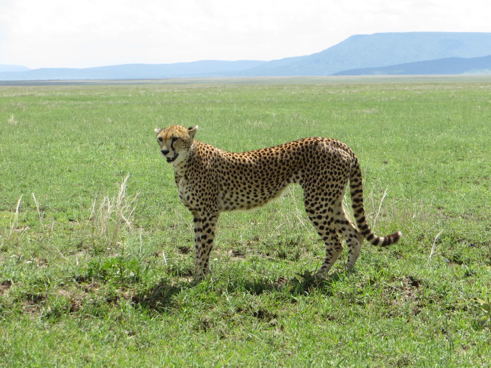 Tanzania Ultimate Luxury Safari