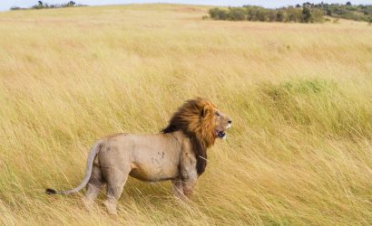 Tanzania Safaris Package