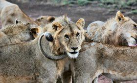 6 Day Tanzania Safari Tour package