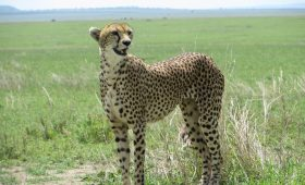 Tanzanzia and Kenya Safari