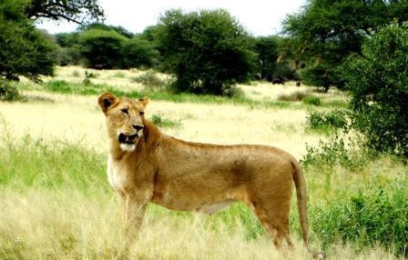 Tanzania Safari Blog -Safaris Tours