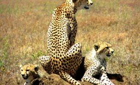 Tanzania Safari Trip